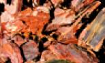 Fenyőkéreg