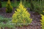 Juniperus chinensis ELDORADO